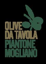 Antica gastronomia - Olive da tavola Piantone Mogliano
